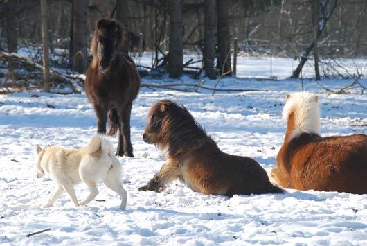 pip en paarden